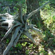 Weathered Wood Stump